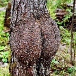 Does this Blog Make My Butt Look Big?