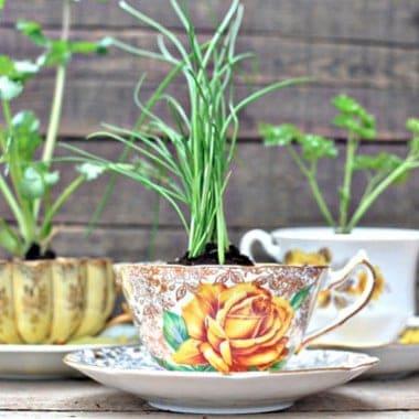 Plant and Garden DIY Ideas