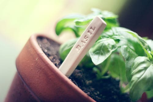 DIY garden markers - Wit & Whistle
