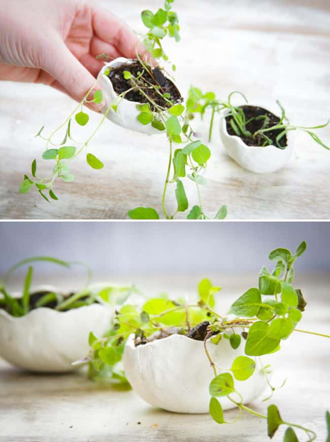 Clay egg planters | HelloGlow.co