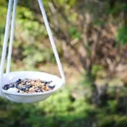 DIY Clay Birdfeeder