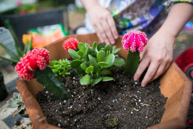 DIY Succulent Garden | Hello Glow