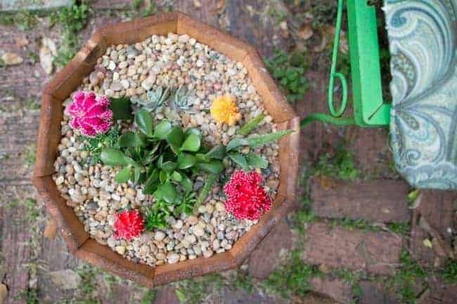 How to make a succulent garden Hello Glow