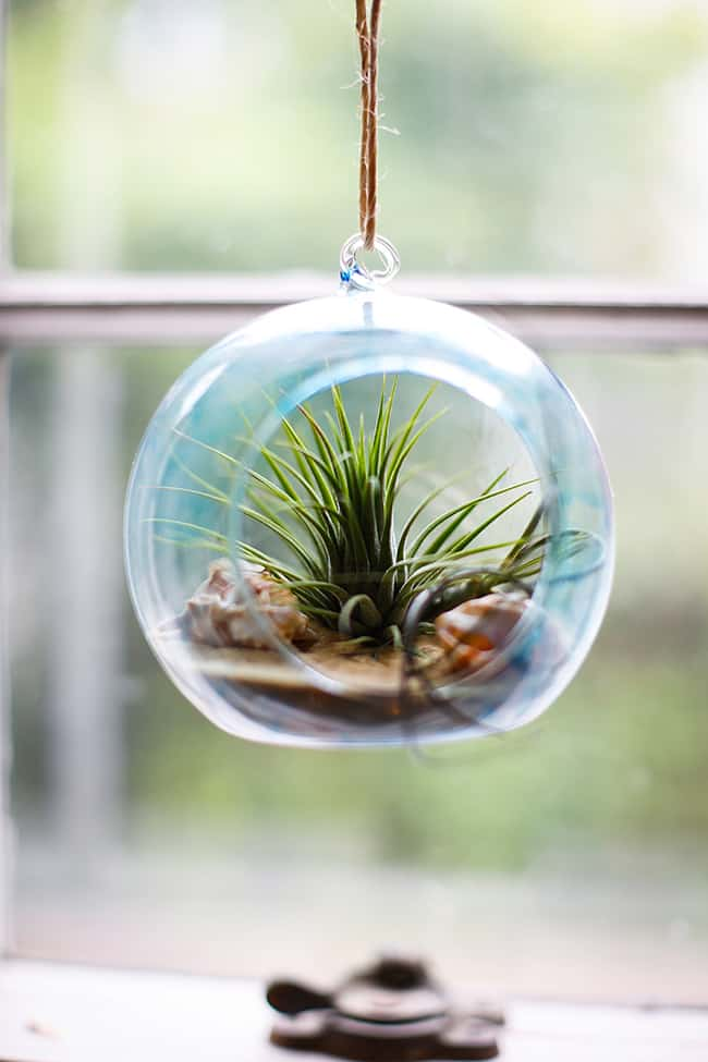 DIY Beach Inspired Terrarium