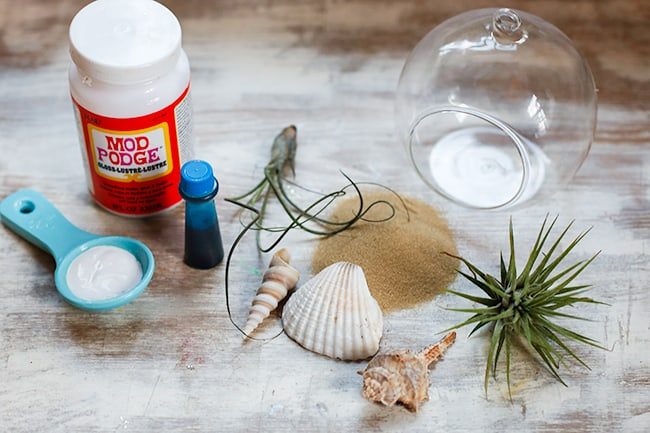 How To Make a Beach Terrarium