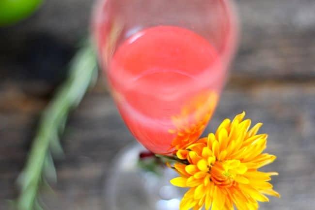 Halloween Vodka Blush Cocktail Recipe | Hello Glow