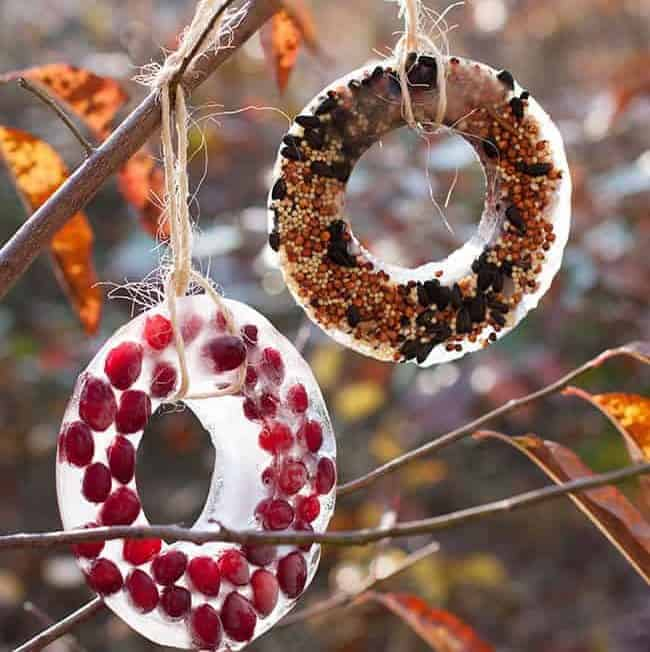 DIY Birdseed Ice Ornaments