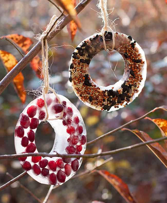 Birdseed Ornaments | Hello Glow