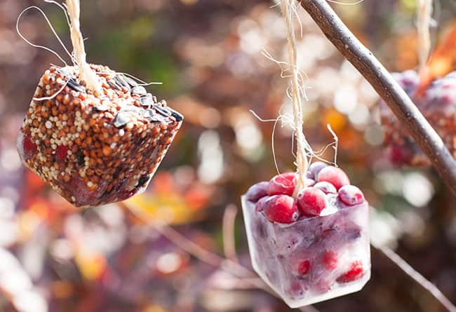 DIY birdseed ice ornaments | Hello Glow