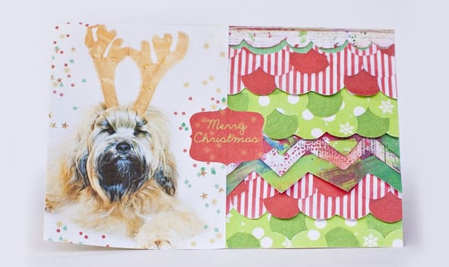 diy holiday cards with pet