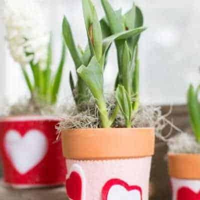 Heart Plant Cozy