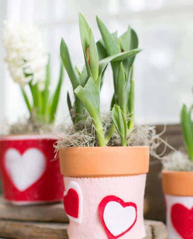 DIY Valentine plant cozy HelloGlowco
