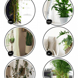 10 Fuss Free House Plants That Clean the Air