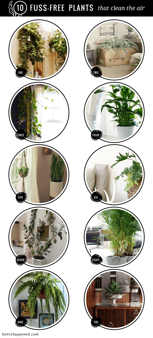 10 fuss free house plants that clean the air hello glow for Nasa indoor plant list