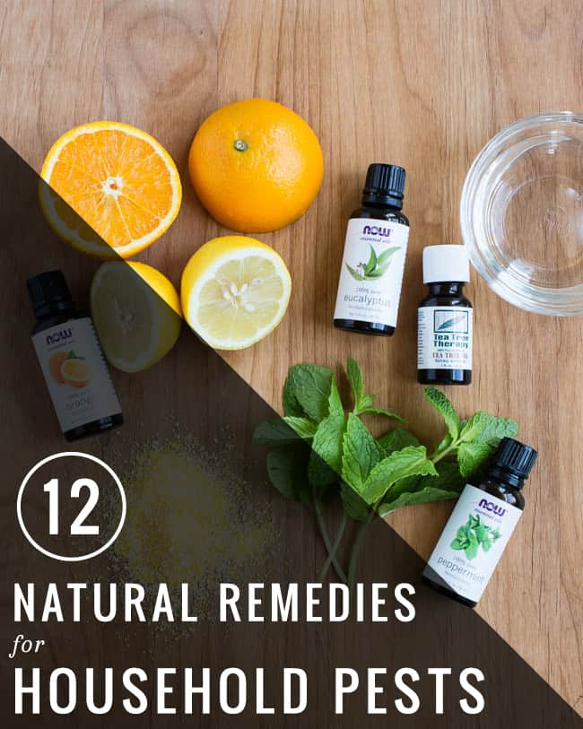 12 Natural Remedies for Household Pests | Henry Happened