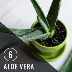 6 Aloe Vera Health Benefits You Probably Didn't Know About