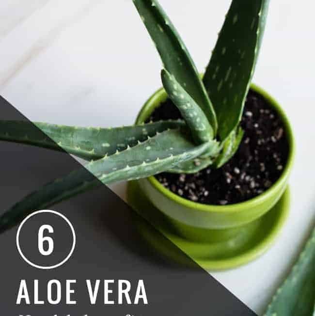 6 Aloe Vera Health Benefits | HelloGlow.co