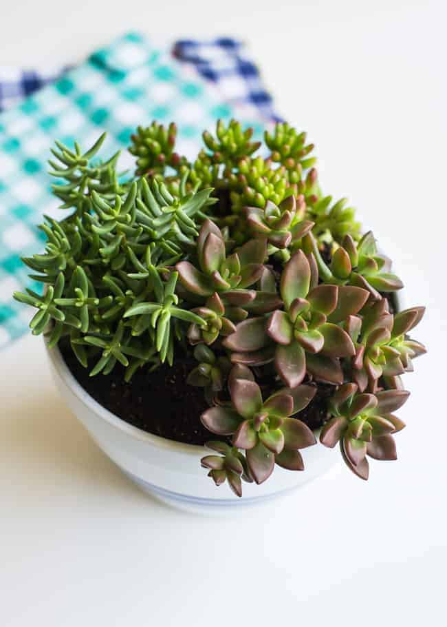 11 Easy To Grow Houseplants HelloGlowco