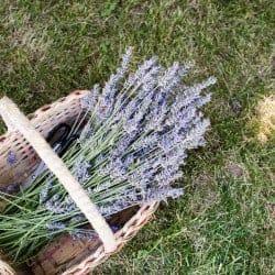 17 Pretty Ways to Display Dried Herbs