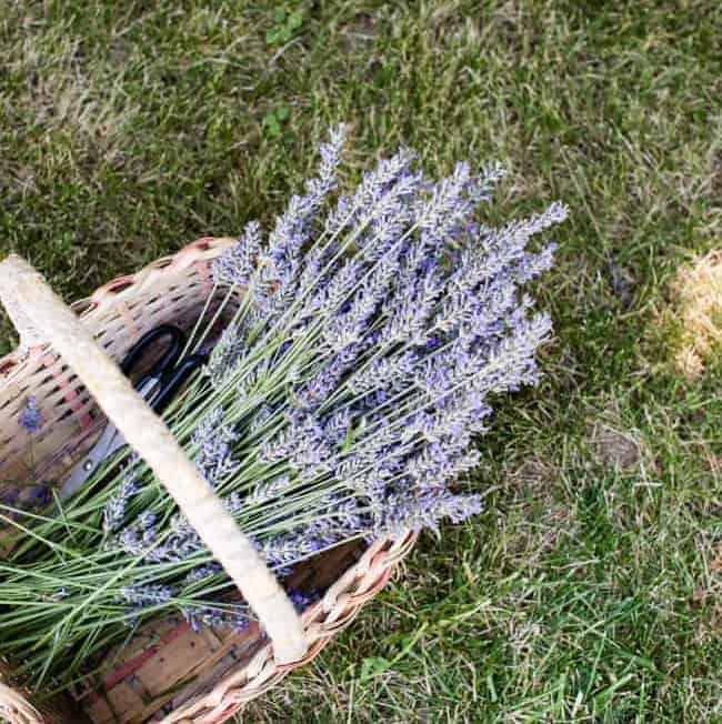DIY Lavender Linen Spray | HelloGlow.co