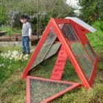 DIY Backyard Chicken Coops