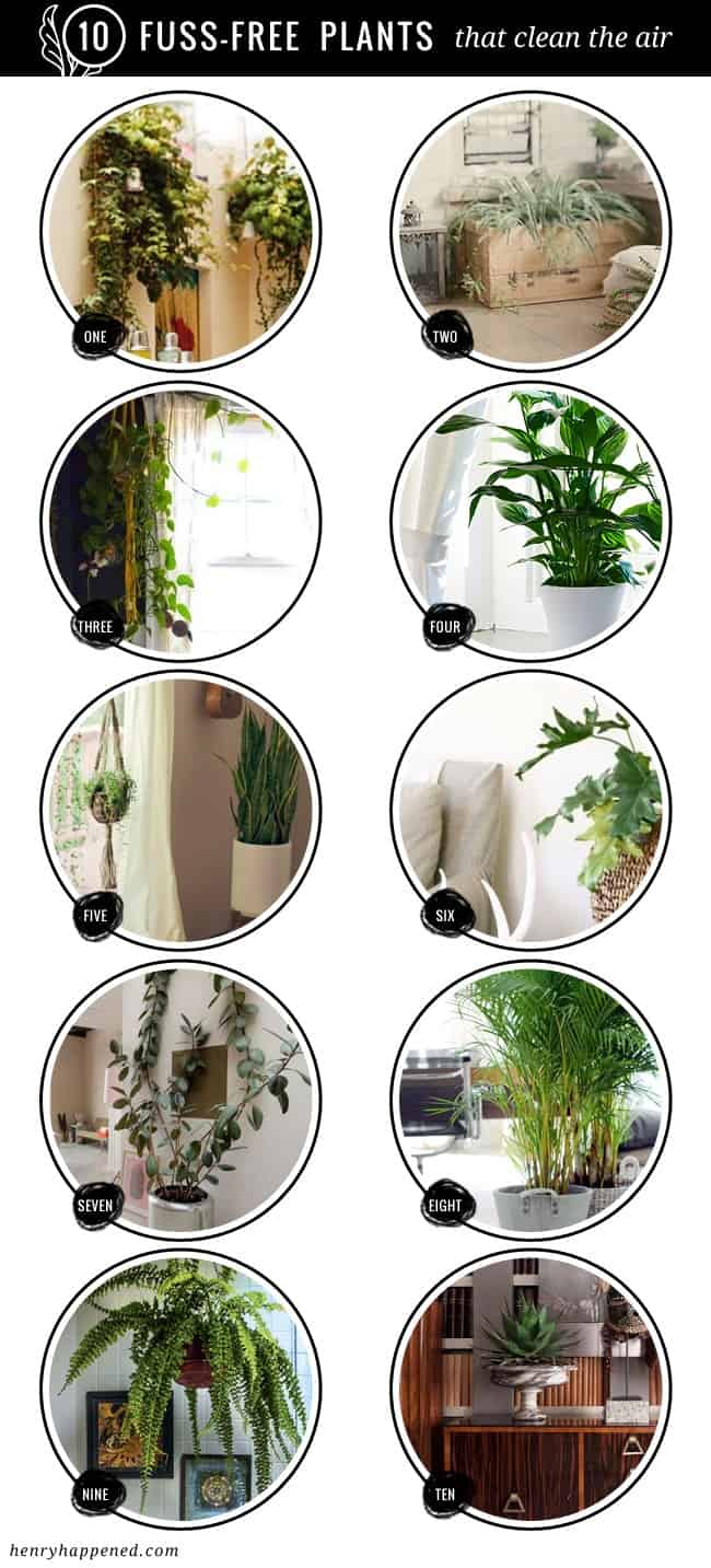 10 Fuss Free House Plants That Clean the Air
