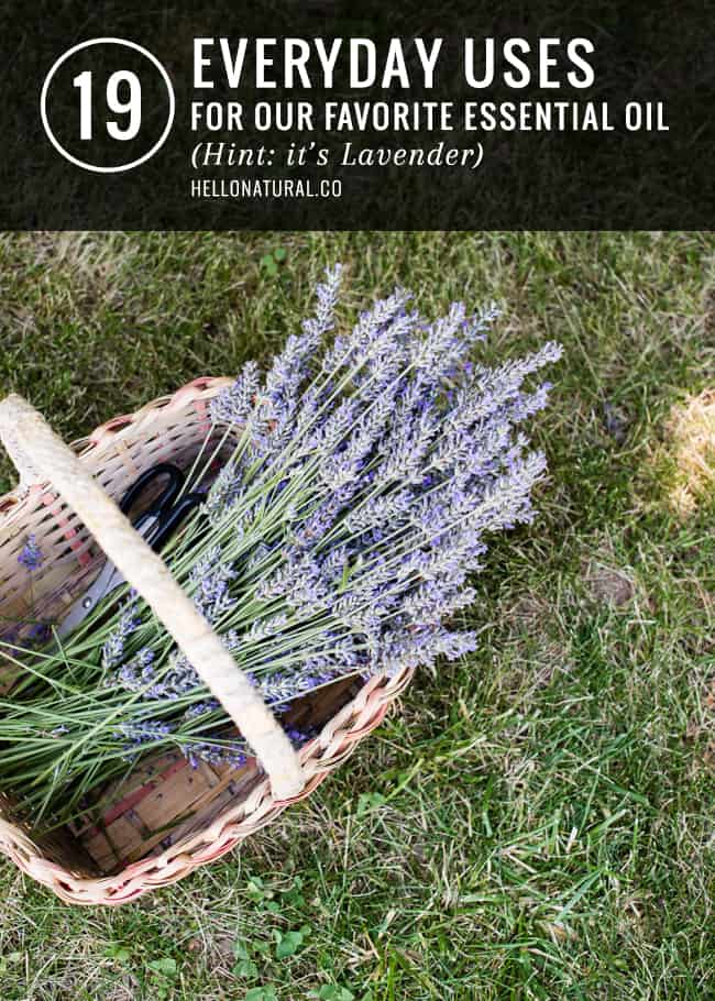 19 Everday Uses for Lavender
