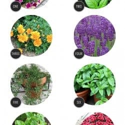 10 Bug-Repelling Plants Your Backyard Needs