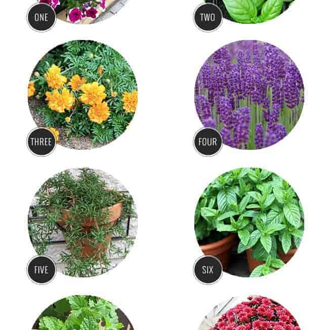 10 Plants That Repel Bugs Naturally