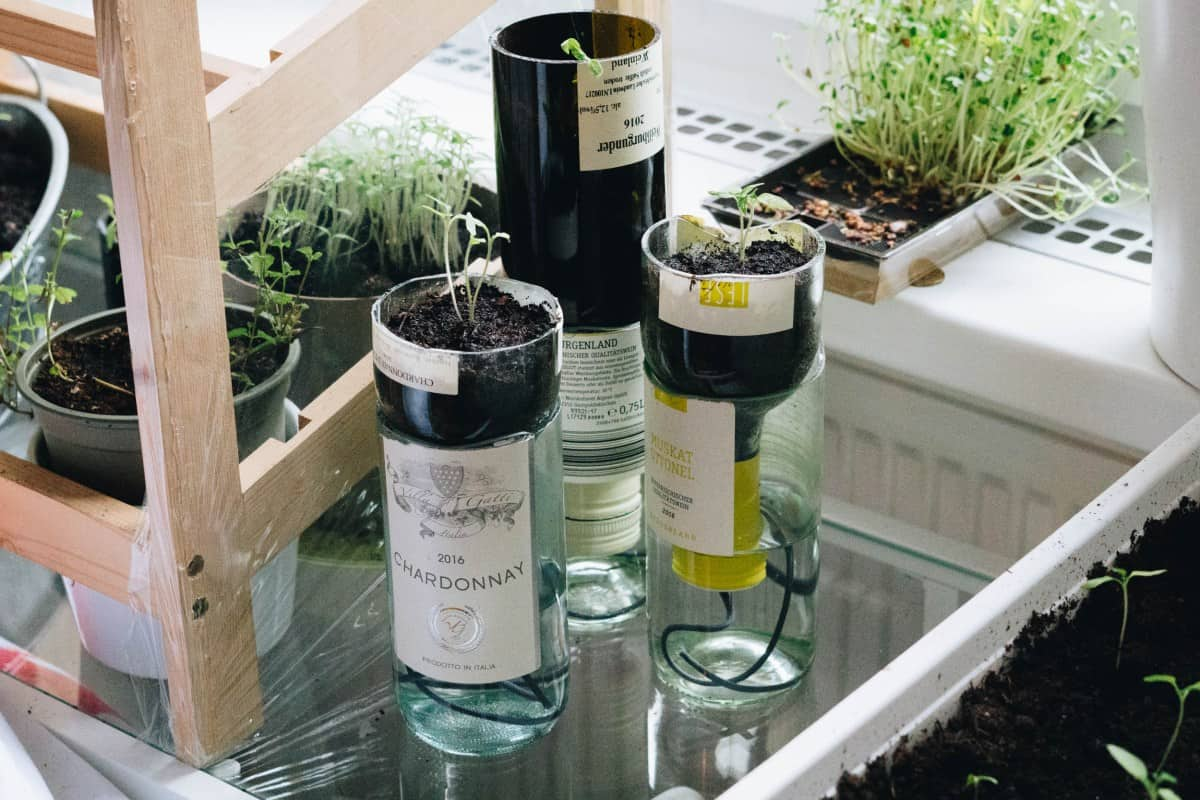 Selfwatering pots by Yellow Girl