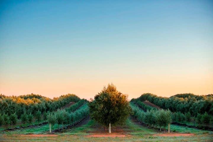 Cobram Estate Olive Oil Giveaway