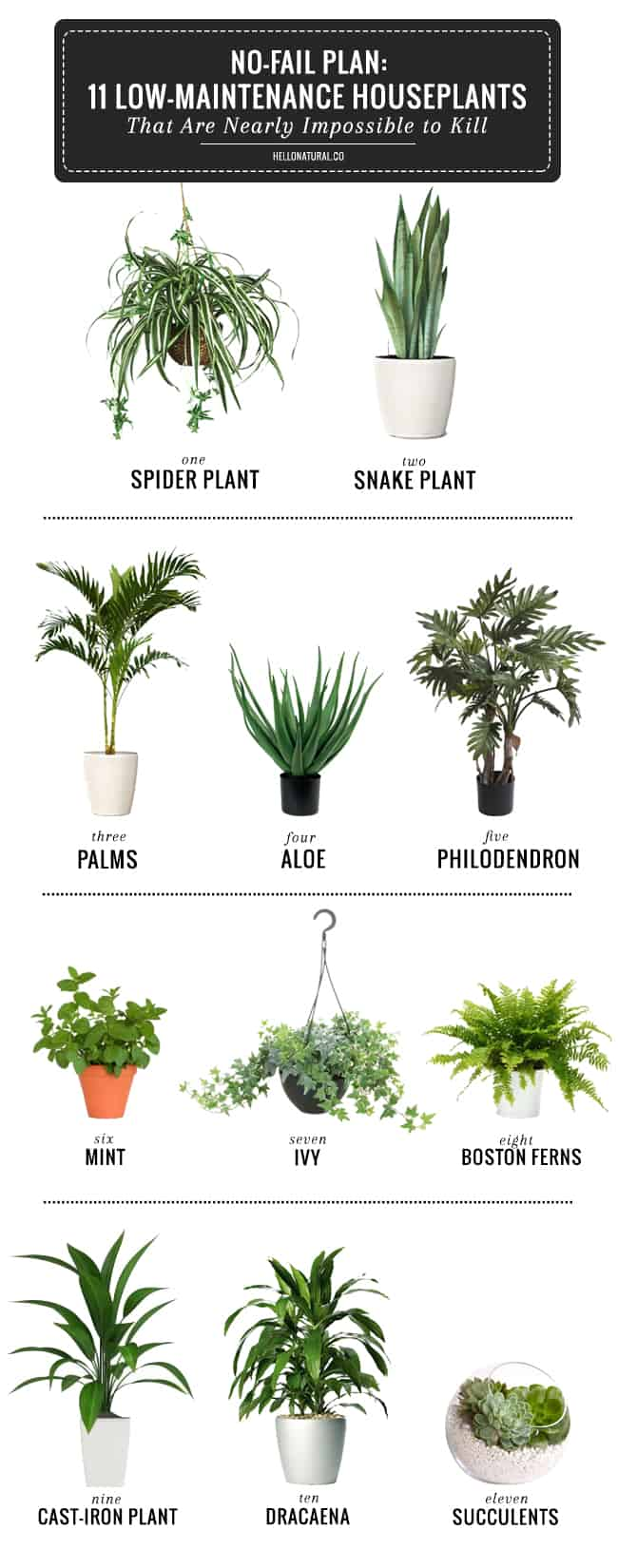 11 Easy To Grow Houseplants Helloglow Co