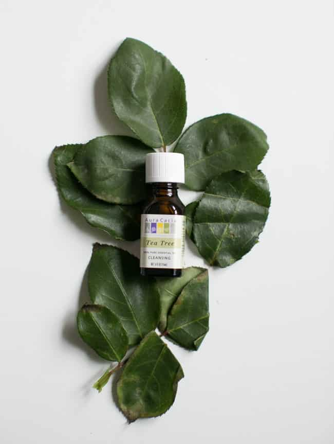 Tea Tree Essential Oil   5 Best Essential Oils for Everyday Use