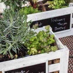 $250 Spring Garden Giveaway