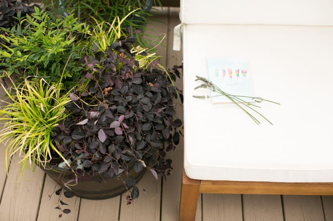 How to Plant a Healing Container Garden