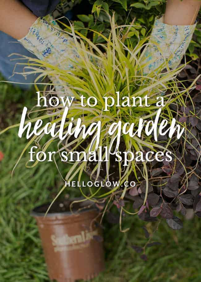 5 Tips for Planting a Healing Container Garden Hello Glow