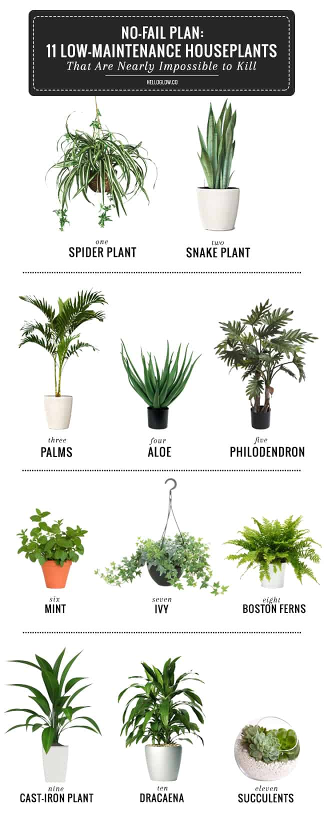 11 Low Maintenance House Plants