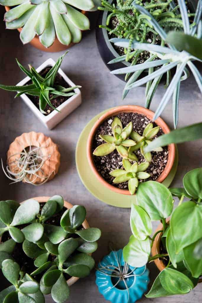 11 Low Maintenance Houseplants How to Care for Them During Winter