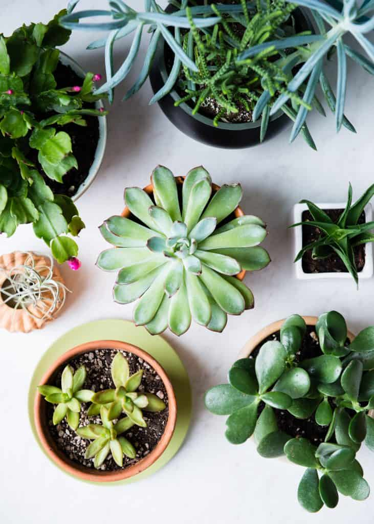 11 low maintenance houseplants how to care for them for Easy low maintenance flowers