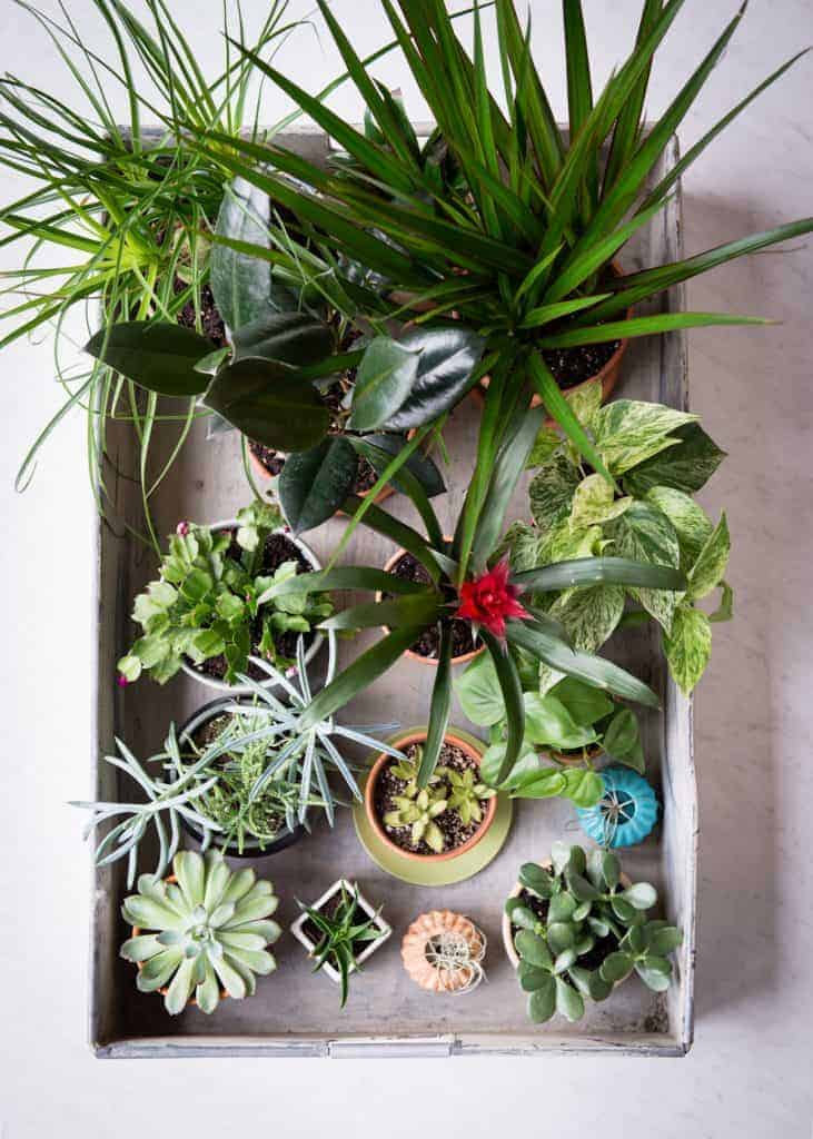 11 Low Maintenance Houseplants + How to Care for Them During Winter