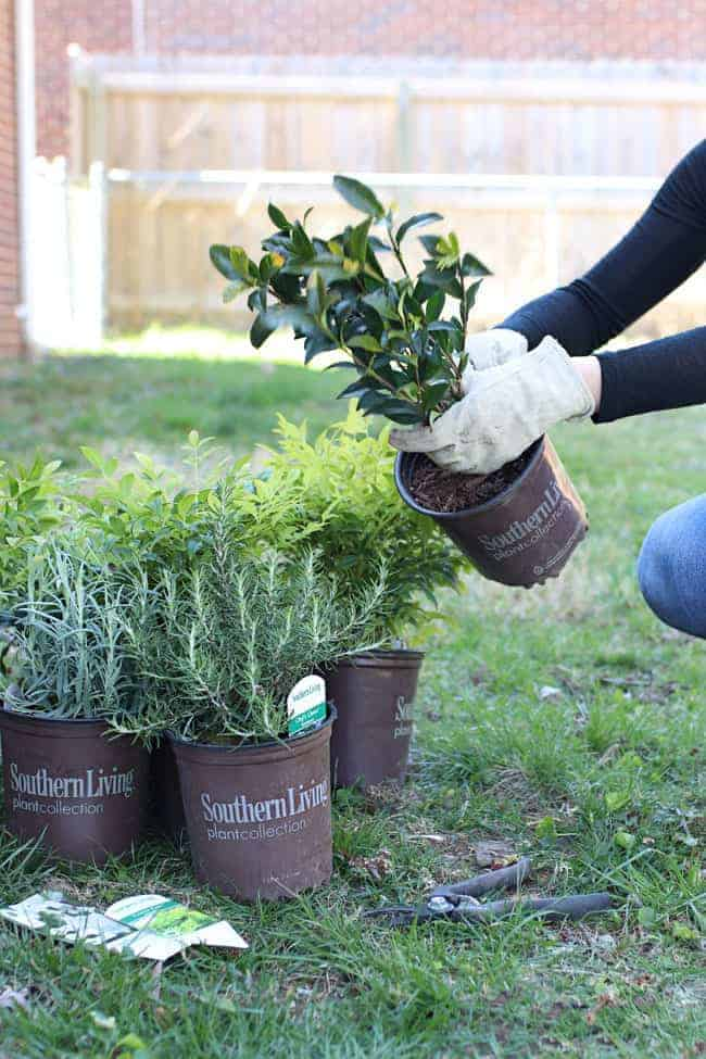Southern Living Plant Collection : 6 Tips for Refreshing Your Yard in 24 Hours (or Less ...