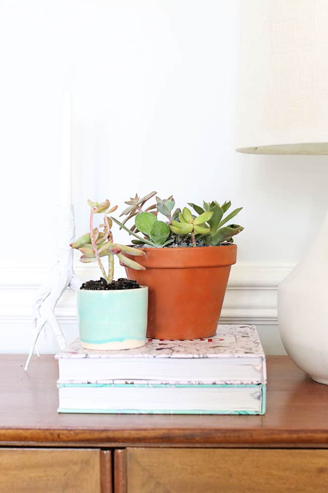 The No Fail Guide to Choosing Growing Succulents Hello Glow