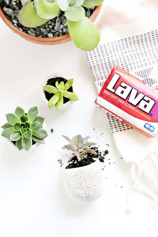 Were Completely Obsessed With These DIY Mini Succulent Pots Hello