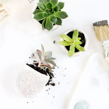 7 DIY Succulent Projects to Green Up Your Space