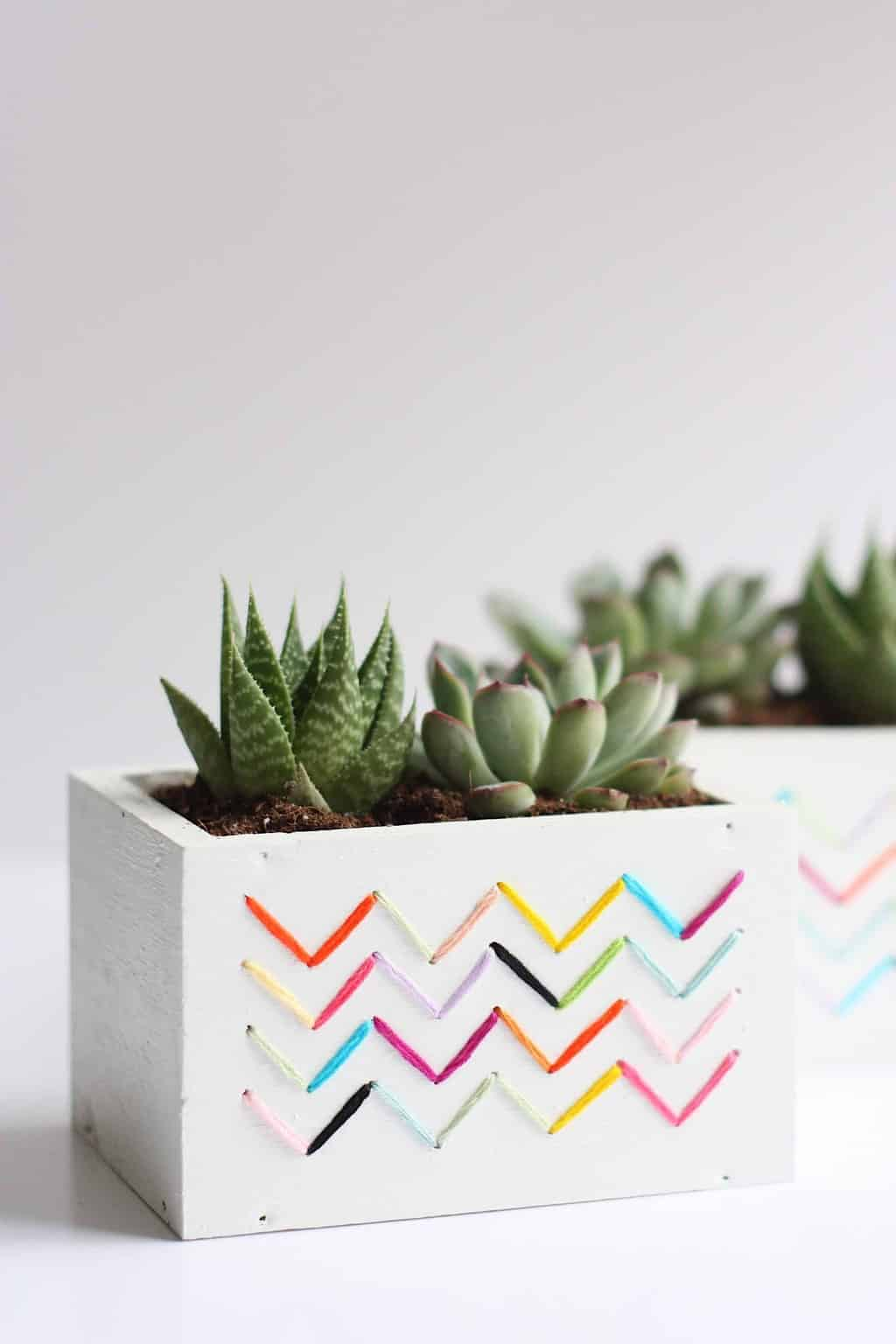 7 DIY Succulent Projects to Green Up Your Space Hello Glow