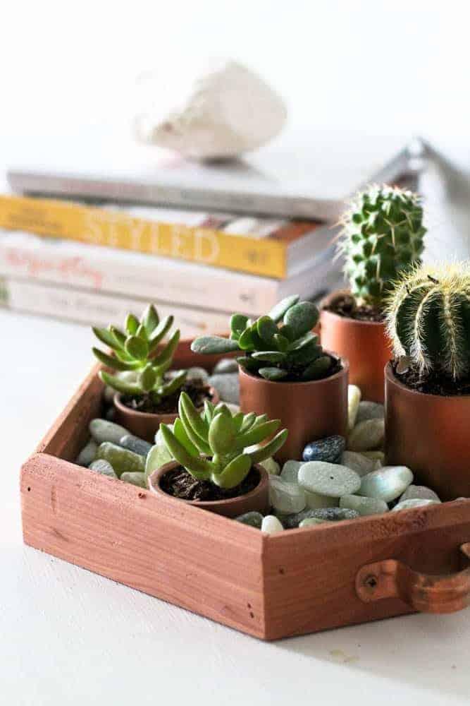 DIY Succulent Garden Centerpiece