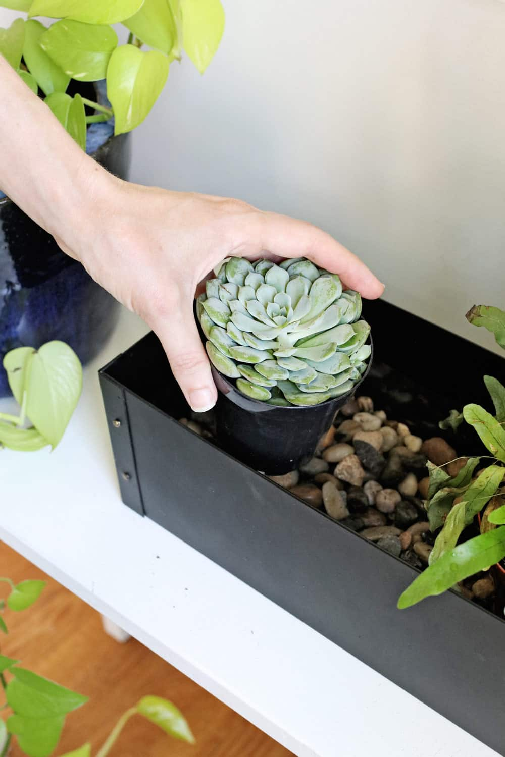 3 Self-Watering Planter Hacks You Have to Try