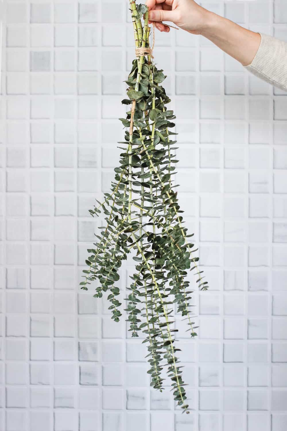 Sinus-Clearing Eucalyptus Shower