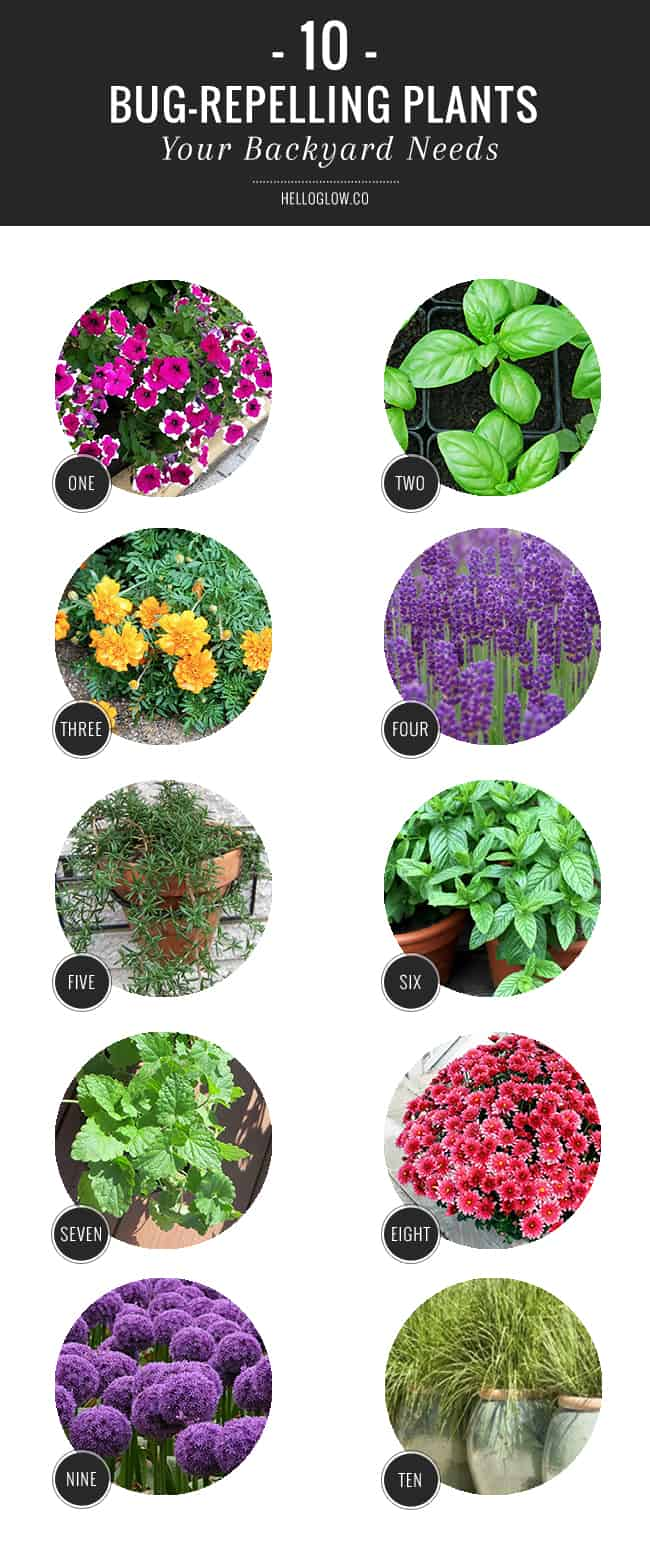 10 Bug Repelling Plants Your Backyard Needs Helloglow Co