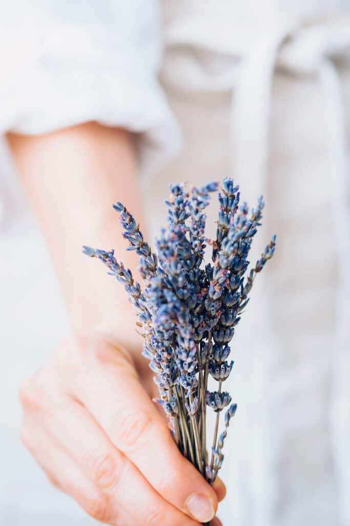 9 Everyday Uses for Lavender